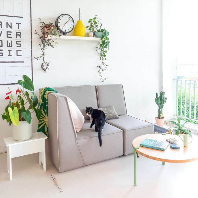 Grey sofa, black cat and side table